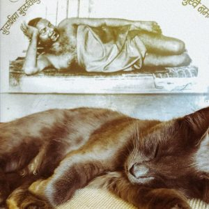 Swami Durgananda's cat Shiva, resting in front of a picture of Bhagavan Nityananda