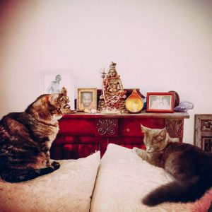 Hamsa and Shiva, Durgananda's cats resting in front of her puja